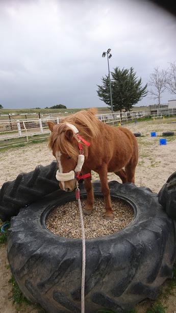Gezonde en gemotiveerde paardentraining