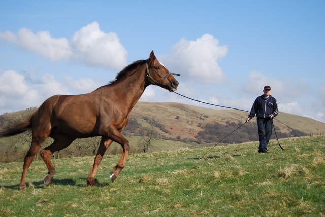 Handling Horses With Confidence – Stop Fearing and Start Enjoying Your Horse